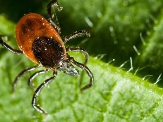 Иркутские ученые объявили о вирусе-мутанте