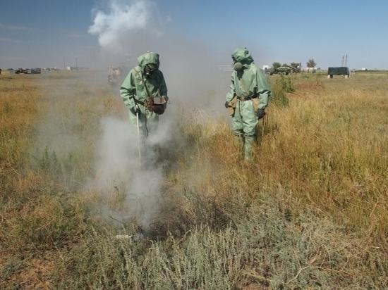 Объявлен карантин: в Волгограде найдены опасные личинки