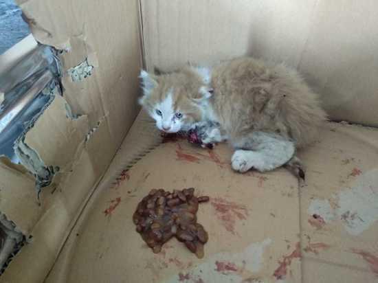 Калининградец разобрал полмашины, чтобы спасти бездомного котенка