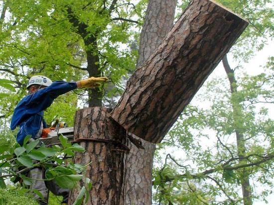 Спиленное дерево убило школьника вКиселевске