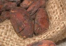 В ходе раскопок на участке Санта-Ана–Ла-Флорида, расположенном на юго-востоке Эквадора, учёные из Университета Британской Колумбии в Канаде обнаружили сосуды со следами какао Theobroma cacao