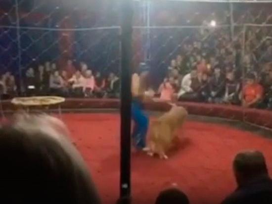 Коллеги раскритиковали директора цирка, где львица напала на девочку