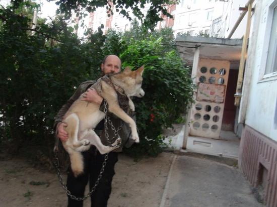 Настоящий волк живет в квартире у волгоградца