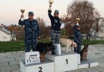 Три золотые медали завоевала сборная УФСИН на состязаниях по многоборью кинологов с собаками, которые прошли в Суздале