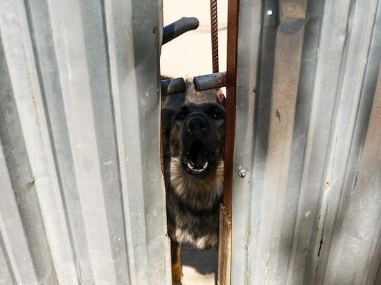 Почти 1000 животных под Волгоградом были фиктивно привиты от бешенства