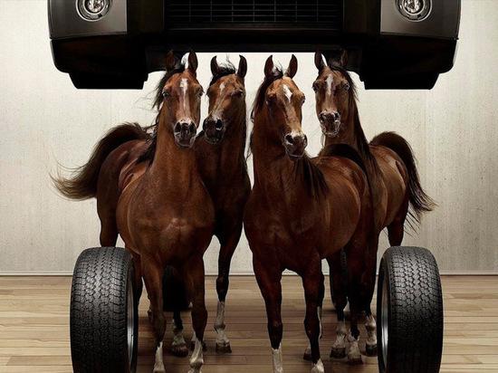 На Камчатке лошадиные силы упадут в цене