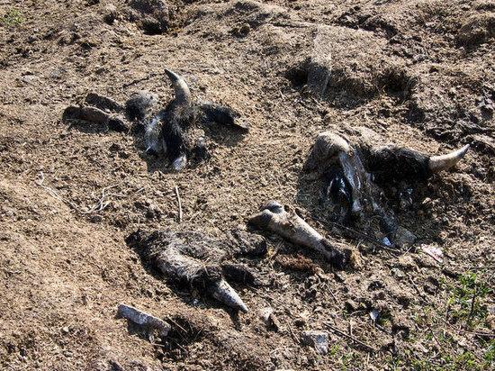 В Бурятии дети нашли человеческую ногу на скотомогильнике