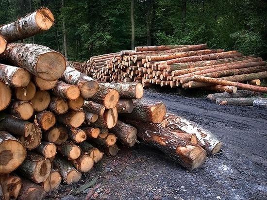 В Бурятии лесная ОПГ рубила лес в Тункинском нацпарке