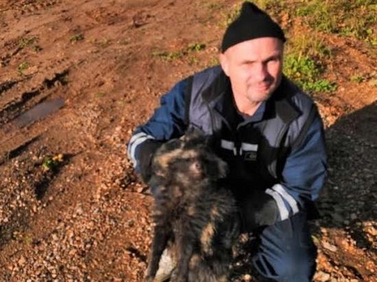 В Ржеве сотрудники МЧС спасли енота