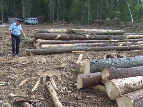 Полная «гармония»: В Ульяновской области нелегальщики вырубают лес, а другие спокойно торгуют им на рынках