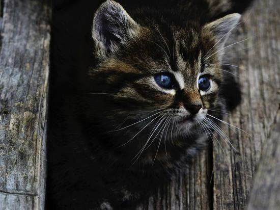 Девушка пристроила котенка в приют за 340 тысяч рублей