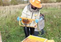 Корреспондент «МК в Смоленске» примерил на себя профессию пчеловода