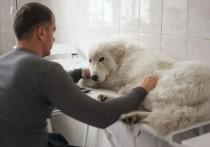В ветеринарии Кузбасса не все радужно, но перспективно