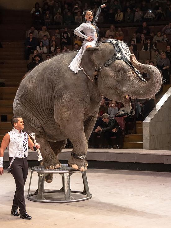 В Воронеж привезли шоу слонов