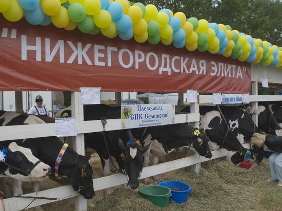Острота бюджетных вопросов в Нижегородской области снизилась