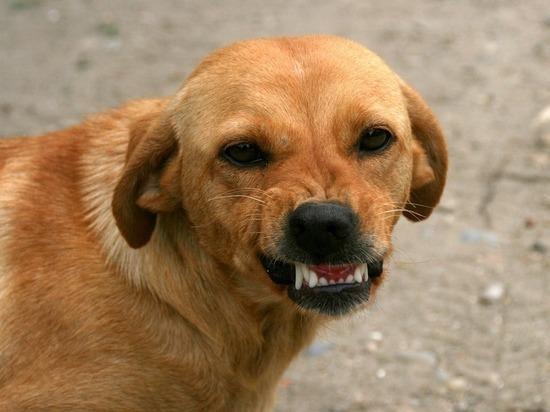 Районные власти заплатят ребенку, которого покусала бродячая собака
