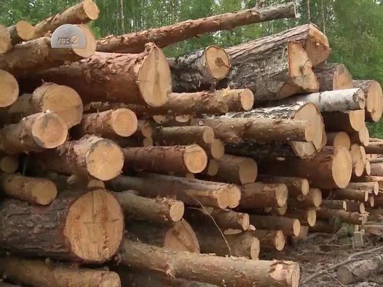 Житель Бурятии незаконно заготовил лес на 54 тыс. рублей