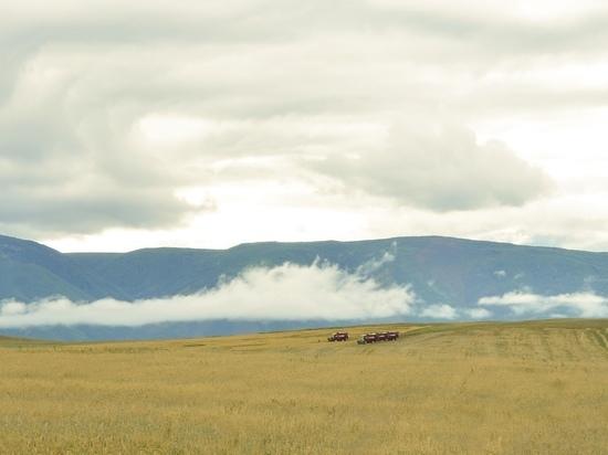 В Туве зафиксирован резкий рост урожая зерновых
