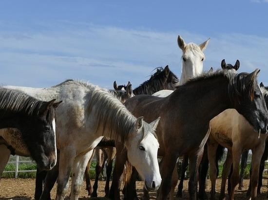 Бурятия заняла 16 место в России по поголовью крупного рогатого скота