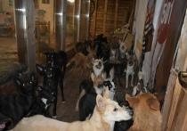 В одном из кировских домов живут более полусотни собак