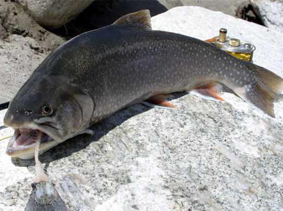 Ученые из Сибири назвали «самую полезную» рыбу в мире