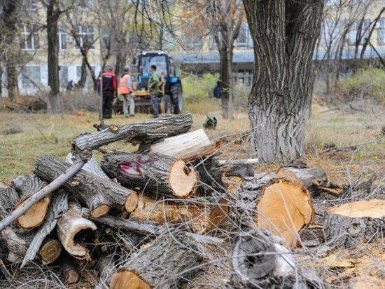 Сквер у «Красного Октября» в Волгограде 50 рабочих расчищают от мусора