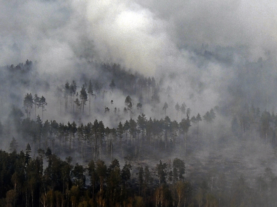 Калифорнийские власти сообщили о 31 погибшем в результате пожаров