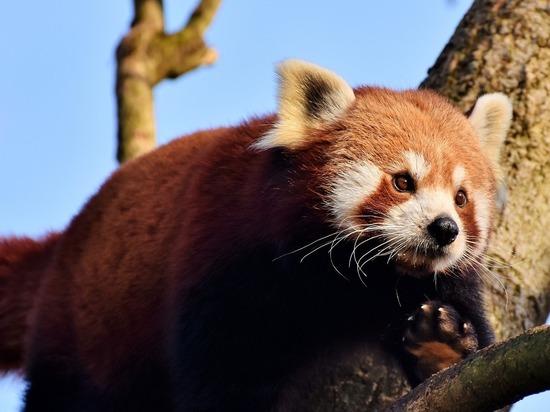 Специалисты возложили вину за вымирание животных на цивилизацию