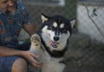Какие ошибки делают кубанцы при воспитании  собаки