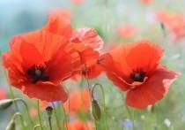 Фотография с красным листом бумаги, на котором изображены цветы, привлекла внимание сотен тысяч интернет-пользователей