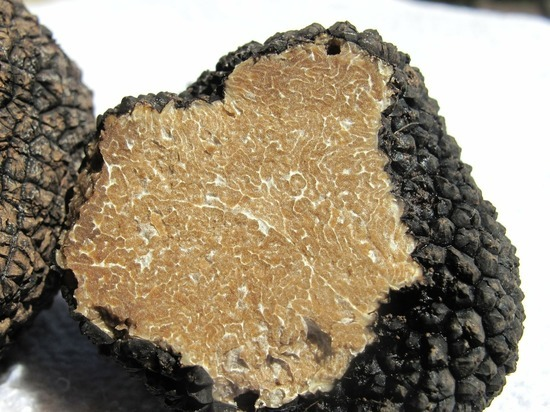 Ученые восстановили генеалогическое древо родословной грибов трюфелей