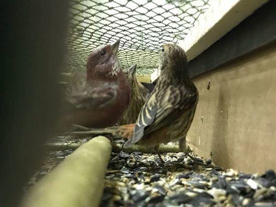 У проводника поезда в Москве изъяли 35 таежных птиц