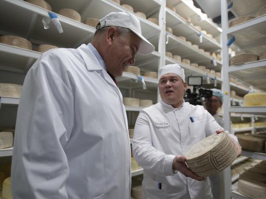 Вологодские сыры становятся таким же популярным брендом, как «Вологодское масло»