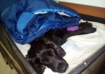 Сотни калужан откликнулись помочь собаке-поисковику из