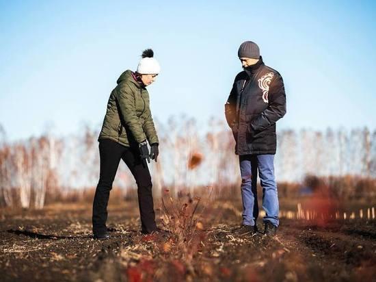 В Тамбовской области возрождают сады черноплодной рябины