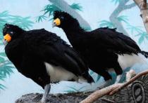 В зоопарке появилась птица, чьи приказы выполняются беспрекословно