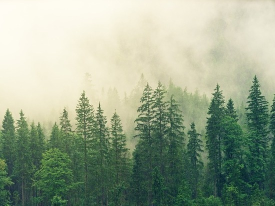 В Бурятии мастер леса нанес экологии ущерб в 1 миллион рублей