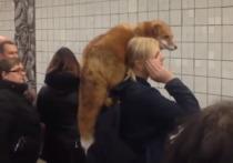 В московском метро отреагировали на поездку женщины с лисой