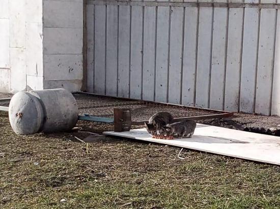 Кошку с котятами замуровали в подвале в центре Москвы