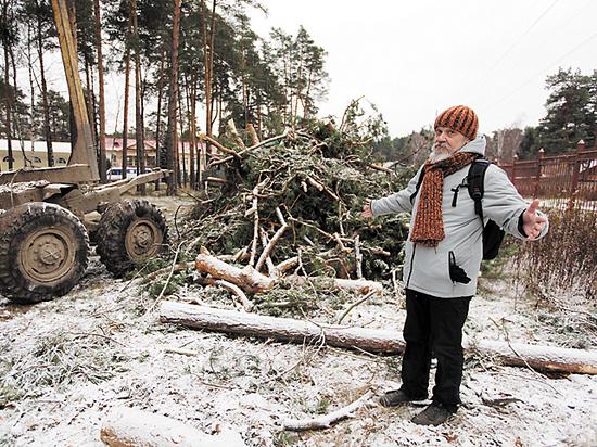 Жителям Кратова энергетики отрубили лес