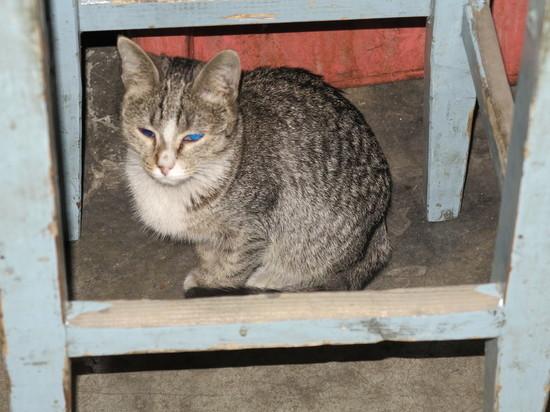 Раздутая в Интернете сенсация про «замурованную в подвале кошку с котятами» оказалась обычной «уткой»