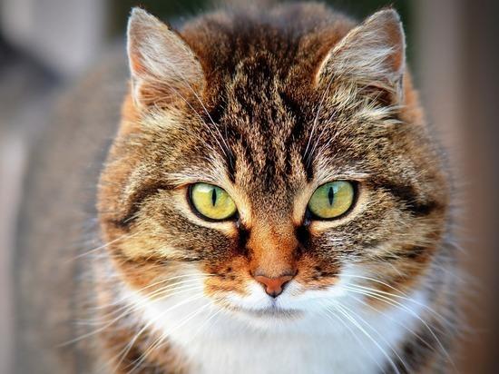 Как помочь кошке и ее хозяину ужиться на одной жилплощади