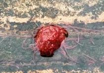 Американец, проживающий в штате Техас, заметил и запечатлел на видео «монстра», состоящего из многочисленных красных червей