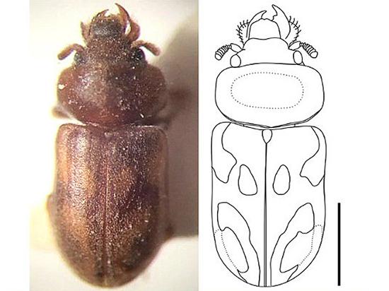 Энтомолог назвал нового жука в честь Егора Летова - кумира юности