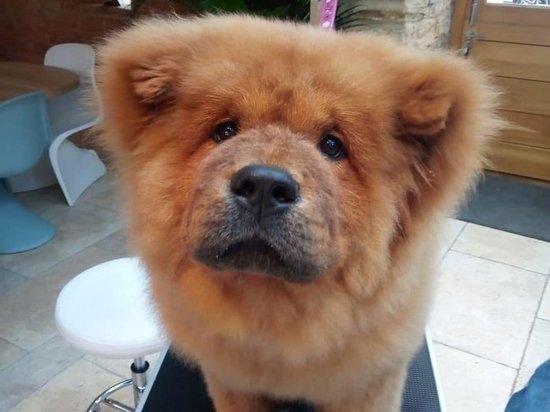 В Великобритании выпустили из тюрьмы щенка, укусившего полицейского