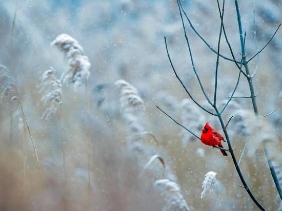 Москвичам пообещали зимние морозы со следующей недели