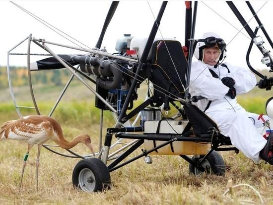 Стерха Путина готовят к новому проекту, сообщили СМИ