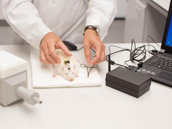Крыса узнает ракового больного по запаху: уникальное открытие российских ученых