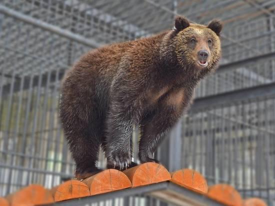 Сахалинский зоопарк готовится к зиме