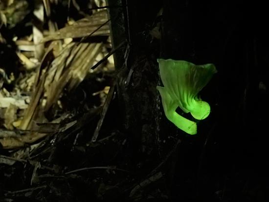 Российские ученые смогут с помощью светящихся грибов обнаружить рак